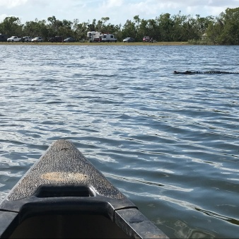 One of many alligator sightings during a paddle through Nine Mile Pond