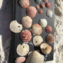 beautiful shells from the beach