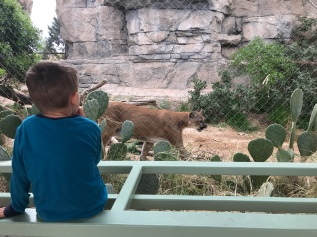 We loved watching the two panthers climb around their enclosure, until we realized the one was stalking CJ