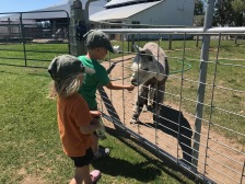 The kids loved feeding the alpacas